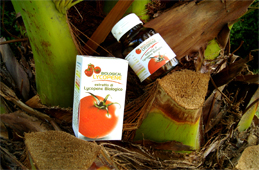 Natural product, Lycopene manufacturing suppliers... Italian biological and organic Lycopene designed and made in Italy with the most powerful red tomatoes... Biological lycopene may prevent prostate cancer, heart disease and other forms of cancer... Biological Lycopene manufacturing solutions to the worldwide health care distribution market..